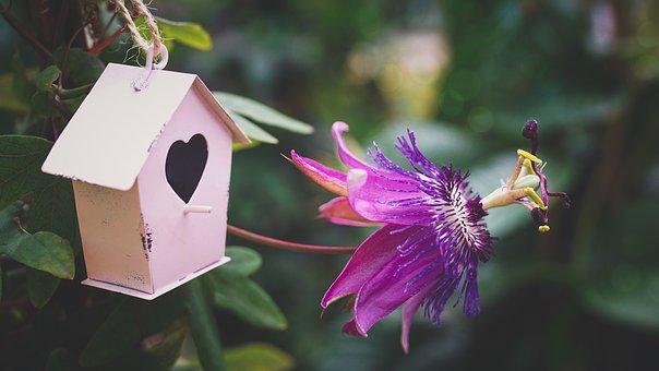 Fleur Passion Pourpre