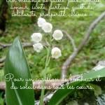 Muguet 1er Mai-page-002